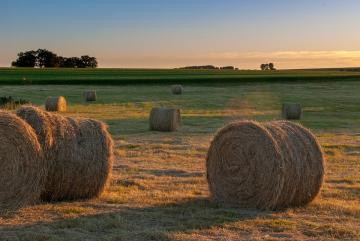 And after harvest. - It used to be beautiful sheaves and huge stacks. Now balls. A little regret.