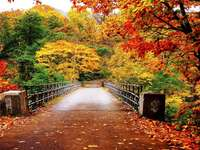 Πολύχρωμο φθινόπωρο. - Πολύ πολύχρωμο φθινόπωρο. Όμορφα φύλλα του φθινοπώρου.