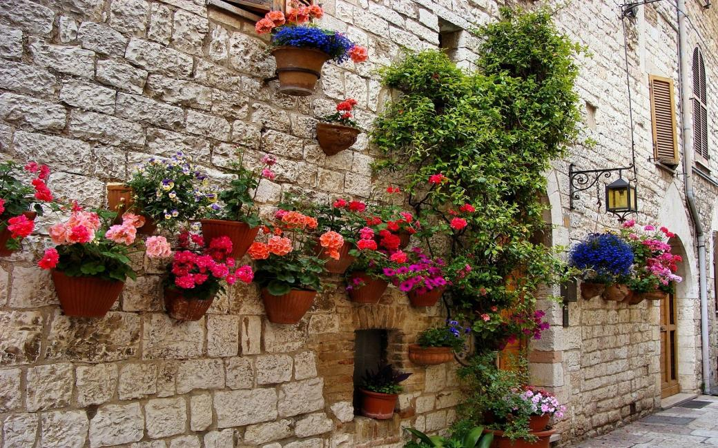 flowers on the wall of the hou