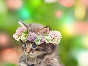 kochane zwierzęta - kochane zwierzęta- kotek z wianuszkiem
