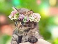 schöne Tiere - liebenswerte Tiere - ein Kätzchen mit einem Kranz