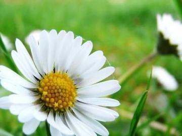 kwiaty- sama natura - kwiaty- sama natura- stokrotka