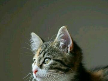 kochane zwierzęta - szary kotek na koszu