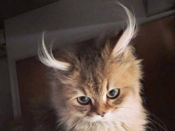 kochane zwierzęta - kochane zwierzęta--- co za uszy