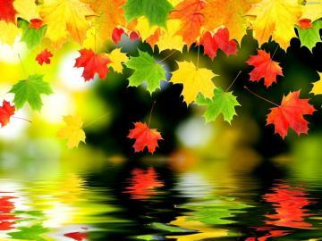 sama natura - sama natura---- listki, liście