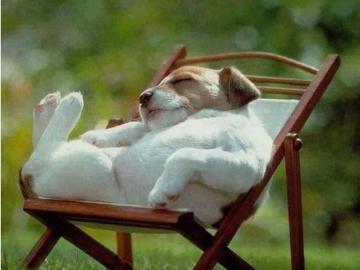 kochane zwierzęta - kochane zwierzęta--- śpię nie przeszkadzać