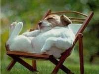 schöne Tiere - liebenswerte Tiere --- Ich schlafe, bitte nicht stören