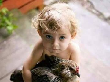 kochane zwierzęta - uratowana kura na rosół