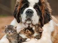 lovely animals - friends - cats and dog lovable animals - like a dog with a cat lovely animals