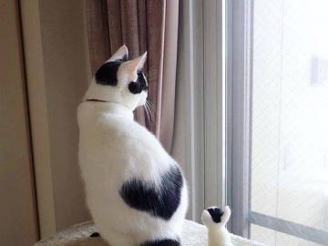 kochane zwierzęta - kochane zwierzęta--- kotka i kotek