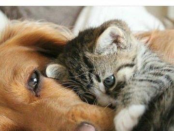 kochane zwierzęta - kochane zwierzęta- nie przeszkadzać