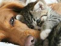 schöne Tiere - liebenswerte Tiere - bitte nicht stören