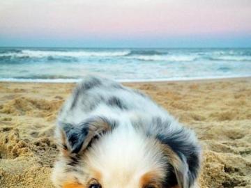 kochane zwierzęta - Κάνω ηλιοθεραπεία στην παραλία