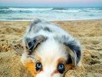 schöne Tiere - Κάνω ηλιοθεραπεία στην παραλία