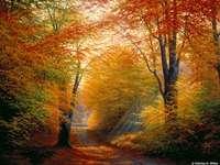 Есенни цветове.