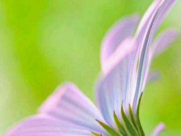 kwiaty- sama natura - kwiaty- sama natura/piękny