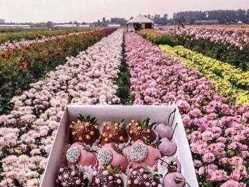 Fleurs et chocolats - Fleurs et chocolats sucrés