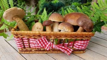 basket with mushrooms - basket with mushrooms, treasures from the forest