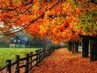 Copaci colorați toamna.