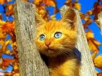 Pisica de pe gard.