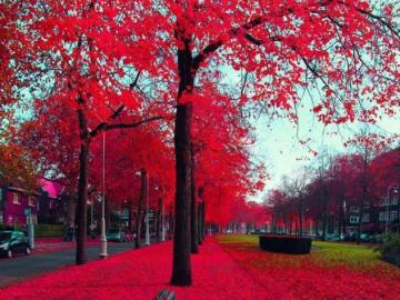 Red autumn - Red beautiful autumn