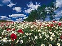 Fehér és piros virágok.