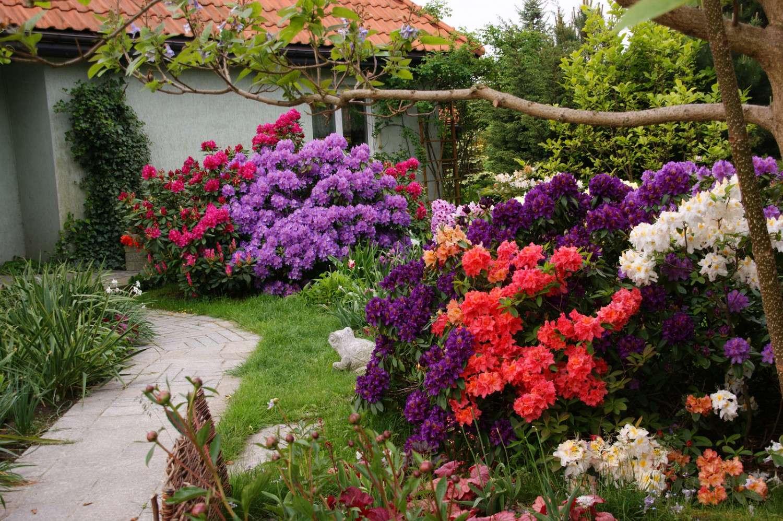 Blumen im Garten - Bunt, Hinterhof Garten. Es ist wahrscheinlich Azalee. Aber ich werde nicht weise sein. Die Mädchen werden auffordern. Hinterhof-Garten (10×10)