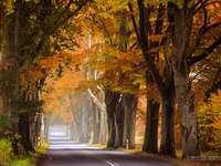 Авеню от стари дървета.