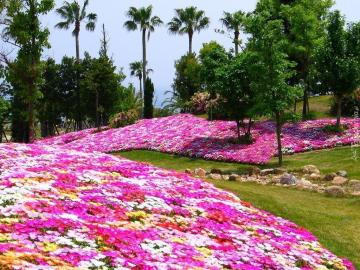 Carpets of flowers. - Beautiful rugs with flowers.