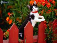 Cat on the fence II