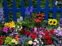 Цветна каскада. - Цяла гама от цветни цветя. И синята ограда. Очарователн