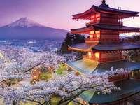 Japan blommande körsbär