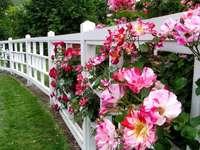 Virágos kerítés.