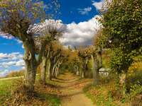 Avenue of old willows. - A typical rural picture.