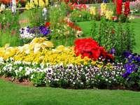 Canteiro de flores. - Fronteira de flores coloridas.