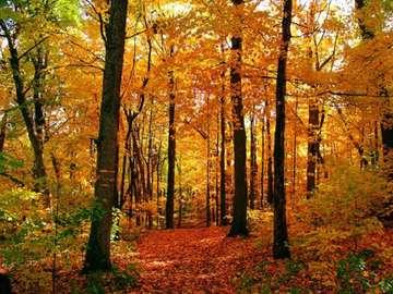 autumn forest - autumn forest, landscape, road