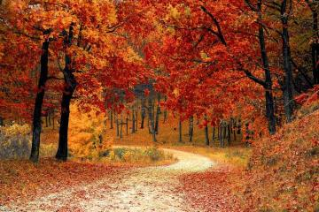 autumn forest - autumn forest, landscape, road through the forest, autumn leaves, colorful autumn leaves