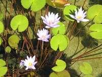 Flores em zonas húmidas.