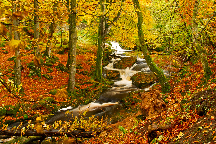 Arroyo en el bosque - Arroyo en el bosque de otoño (5×5)