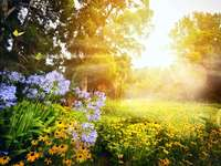Illuminated meadow.