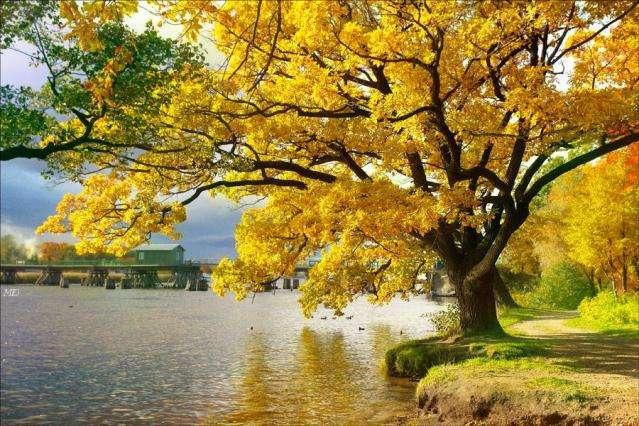 Höstens vibber - Härligt höstträd vid vattnet (6×6)