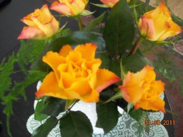 tea roses - flowers that I got