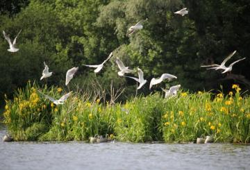 By the river. - Holiday by the river. Birds. Flowers.