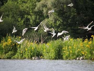 Nad rzeką. - Urlop nad rzeką. Ptaki. Kwiaty.