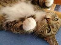 Kitty Luteczka