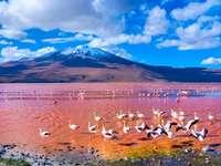 Bolivia. - Różowe wody w Boliwii