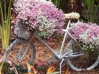 Ανθισμένο ποδήλατο. - Ένα όμορφα ανθισμένο ποδήλατο.