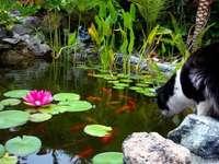 Μια λίμνη με ψάρια. - Μαύρο γατάκι. Μια λίμνη με κόκκινα ψάρια.