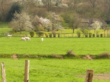 Normandie rurale. - Europe. France. Normandie rurale.