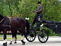 Καλάθι αλόγων. - Μια άμαξα από όμορφα άλογα.